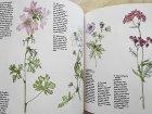 ほかの写真2: Porzellanmalerei - Blumen nach der Natur/Porcelain Painting - Flowers from Nature ヒルデガルド・M.マウエルのポーセリン・ペインティングの本